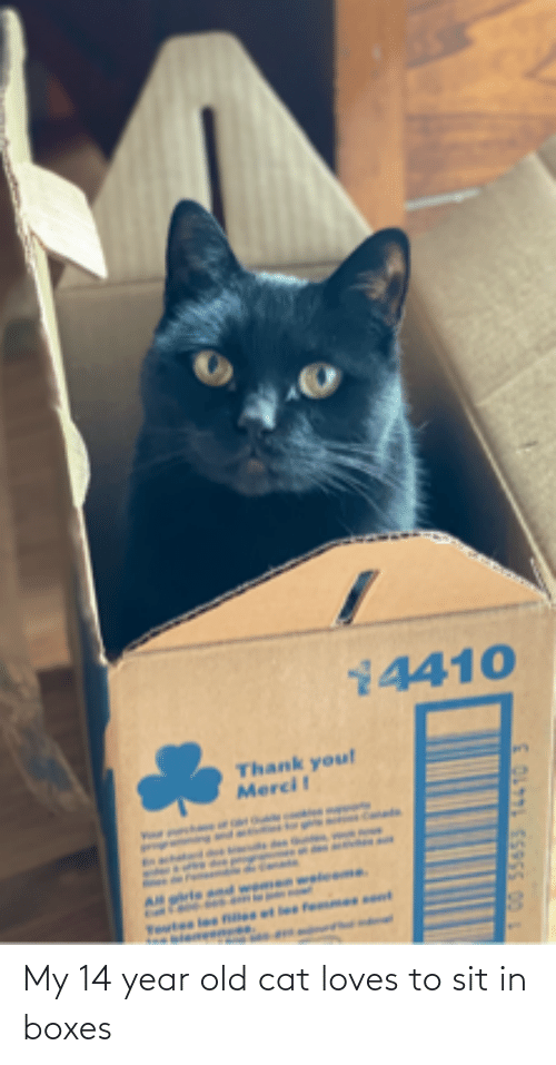 Sit In: My 14 year old cat loves to sit in boxes