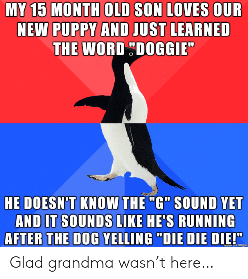 """yelling: MY 15 MONTH OLD SON LOVES OUR  NEW PUPPY AND JUST LEARNED  THE WORD DOGGIE  HE DOESN'T KNOW THE """"G"""" SOUND YET  AND IT SOUNDS LIKE HE'S RUNNING  AFTER THE DOG YELLING """"DIE DIE DIE!""""  haue imgur Glad grandma wasn't here…"""