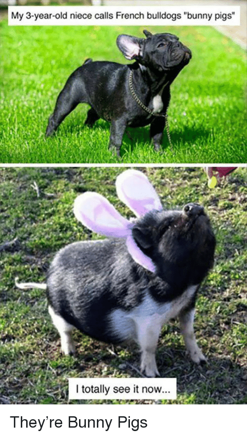 """French Bulldogs: My 3-year-old niece calls French bulldogs """"bunny pigs""""  l totally see it now... <p>They're Bunny Pigs</p>"""