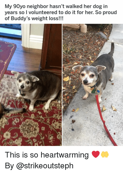 Memes, Proud, and 🤖: My 90yo neighbor hasn't walked her dog in  years so I volunteered to do it for her. So proud  of Buddy's weight loss!!! This is so heartwarming ❤️🤲 By @strikeoutsteph