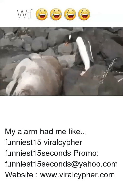 Funny, Alarm, and Yahoo: My alarm had me like... funniest15 viralcypher funniest15seconds Promo: funniest15seconds@yahoo.com Website : www.viralcypher.com