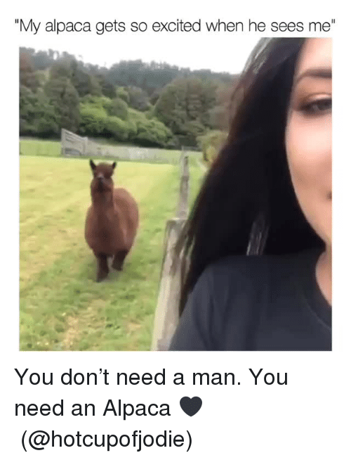 """Alpaca: """"My alpaca gets so excited when he sees me"""" You don't need a man. You need an Alpaca 🖤(@hotcupofjodie)"""