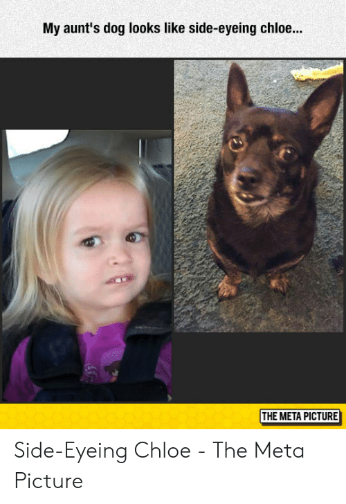Side Eying Chloe: My aunt's dog looks like side-eyeing chloe...  THE META PICTURE Side-Eyeing Chloe - The Meta Picture