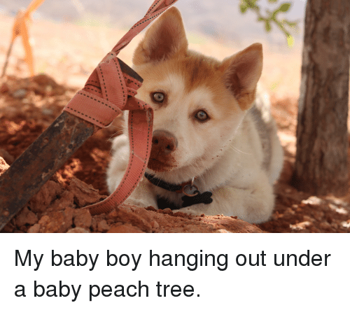 Tree, Baby, and Baby Boy