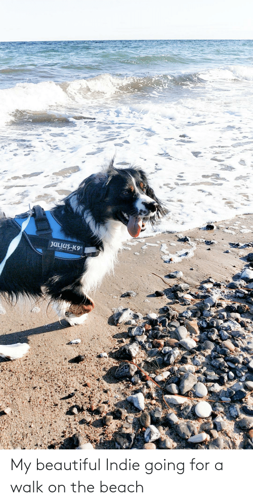 the beach: My beautiful Indie going for a walk on the beach