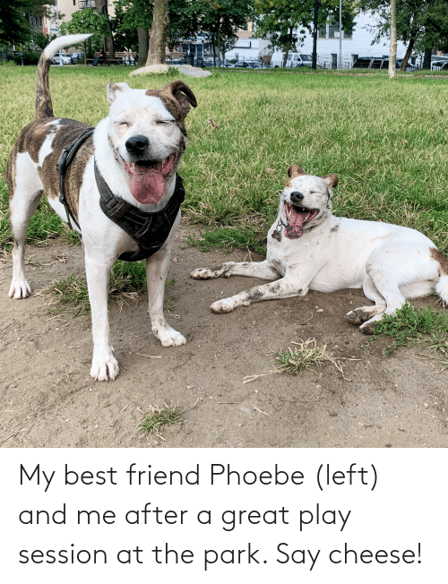say cheese: My best friend Phoebe (left) and me after a great play session at the park. Say cheese!