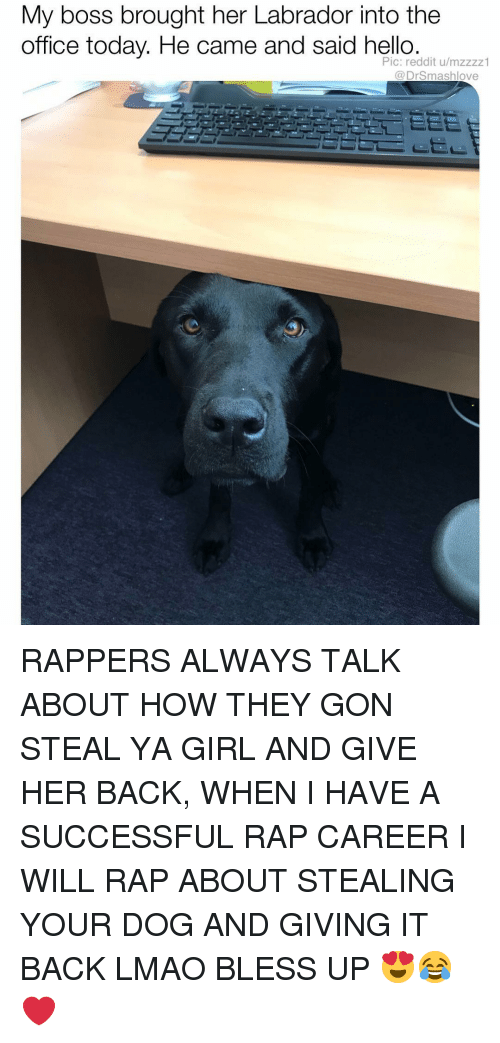 Bless Up, Hello, and Lmao: My boss brought her Labrador into the  office today. He came and said hello  Pic: reddit u/mzzzz1  @DrSmashlove RAPPERS ALWAYS TALK ABOUT HOW THEY GON STEAL YA GIRL AND GIVE HER BACK, WHEN I HAVE A SUCCESSFUL RAP CAREER I WILL RAP ABOUT STEALING YOUR DOG AND GIVING IT BACK LMAO BLESS UP 😍😂❤️