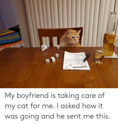 care: My boyfriend is taking care of my cat for me. I asked how it was going and he sent me this.