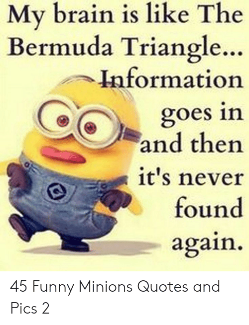Bermuda Triangle: My brain is like The  Bermuda Triangle..  Information  goes in  and then  it's never  found  again 45 Funny Minions Quotes and Pics 2