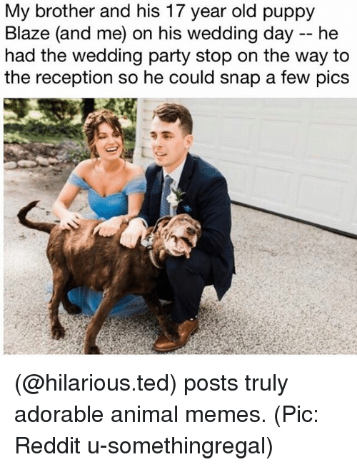 Memes, Party, and Reddit: My brother and his 17 year old puppy  Blaze (and me) on his wedding day -- he  had the wedding party stop on the way to  the reception so he could snap a few pics (@hilarious.ted) posts truly adorable animal memes. (Pic: Reddit u-somethingregal)