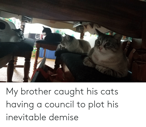 brother: My brother caught his cats having a council to plot his inevitable demise