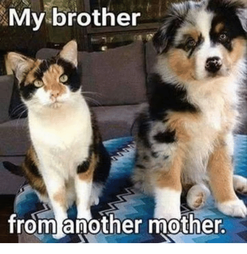 Brother From Another Mother: My brother  from another mother