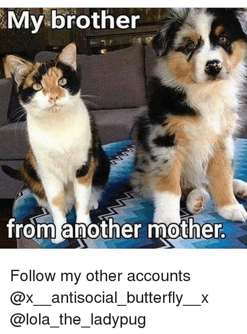 Brother From Another Mother: My brother  from another mother. Follow my other accounts @x__antisocial_butterfly__x @lola_the_ladypug