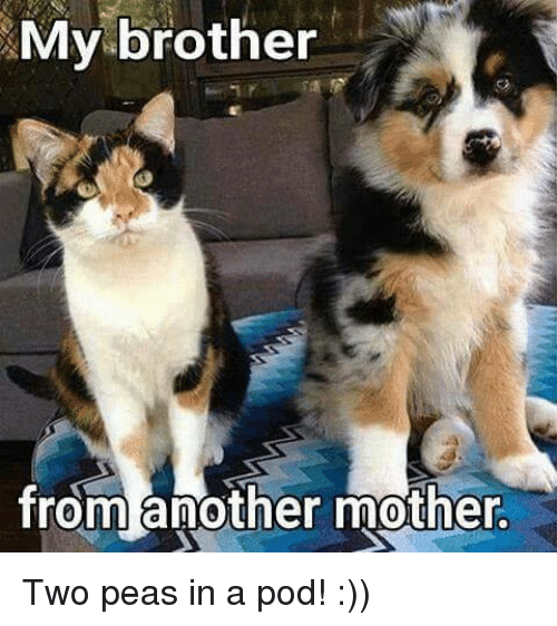 Brother From Another Mother: My brother  from another mother. Two peas in a pod! :))