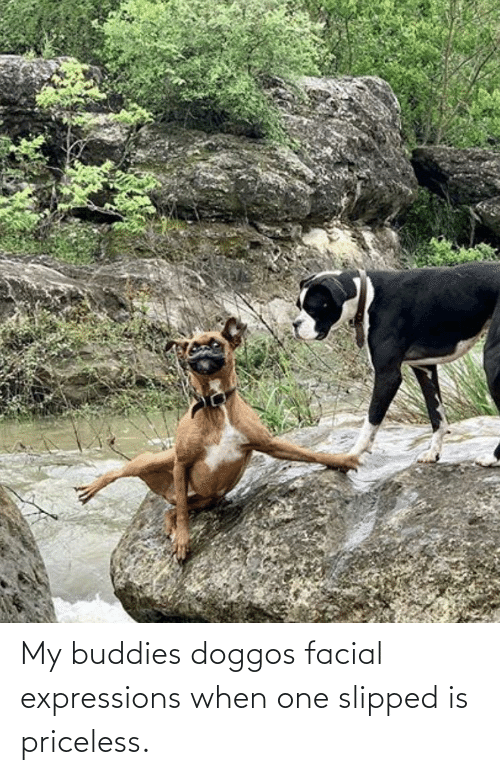 One, Buddies, and Priceless: My buddies doggos facial expressions when one slipped is priceless.
