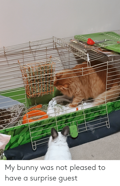Guest: My bunny was not pleased to have a surprise guest