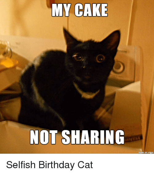 25+ Best Memes About Birthday Cat
