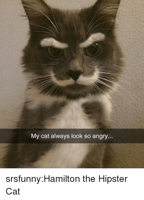 Hipster: My cat always look so angry... srsfunny:Hamilton the Hipster Cat