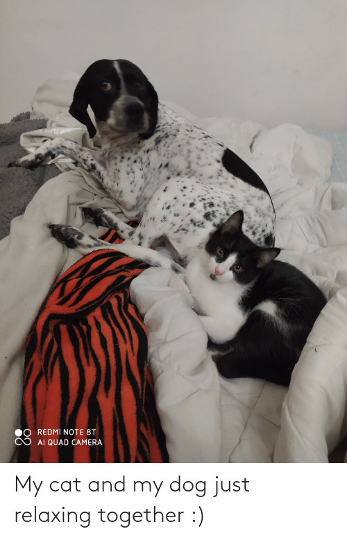 Just Relaxing: My cat and my dog just relaxing together :)