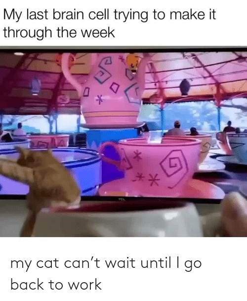 My Cat: my cat can't wait until I go back to work