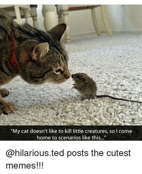 "Memes, Ted, and Coming Home: ""My cat doesn't like to kill little creatures, so I come  home to scenarios like this..."" @hilarious.ted posts the cutest memes!!!"