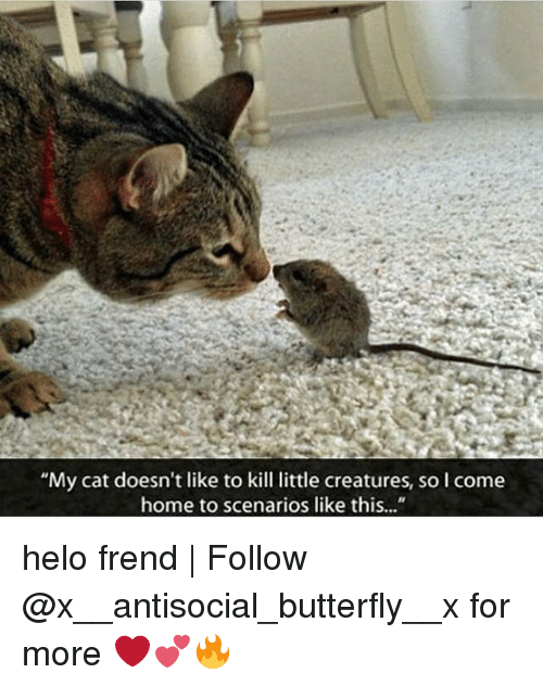 """Memes, Coming Home, and 🤖: """"My cat doesn't like to kill little creatures, so l come  home to scenarios like this..."""" helo frend 