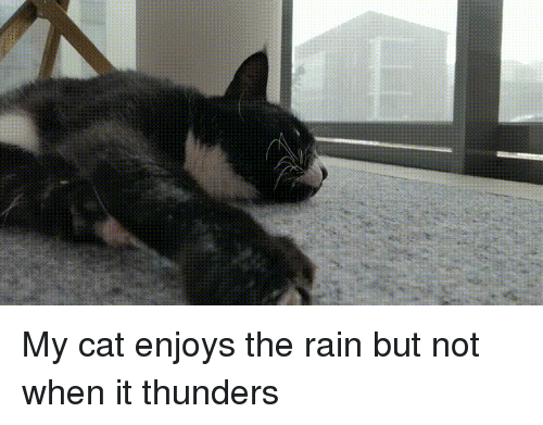 Cats, Funny, and Rain: My cat enjoys the rain but not when it thunders
