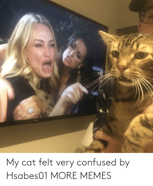 confused: My cat felt very confused by Hsabes01 MORE MEMES