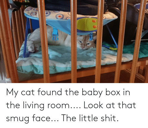 the baby: My cat found the baby box in the living room.... Look at that smug face... The little shit.