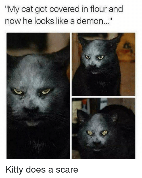 "Cats, Kitties, and Memes: ""My cat got covered in flour and  now he looks like a demon... Kitty does a scare"