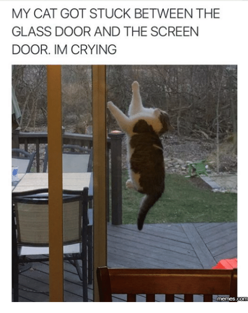Crying Meme: MY CAT GOT STUCK BETWEEN THE  GLASS DOOR AND THE SCREEN  DOOR. IM CRYING  memes.com