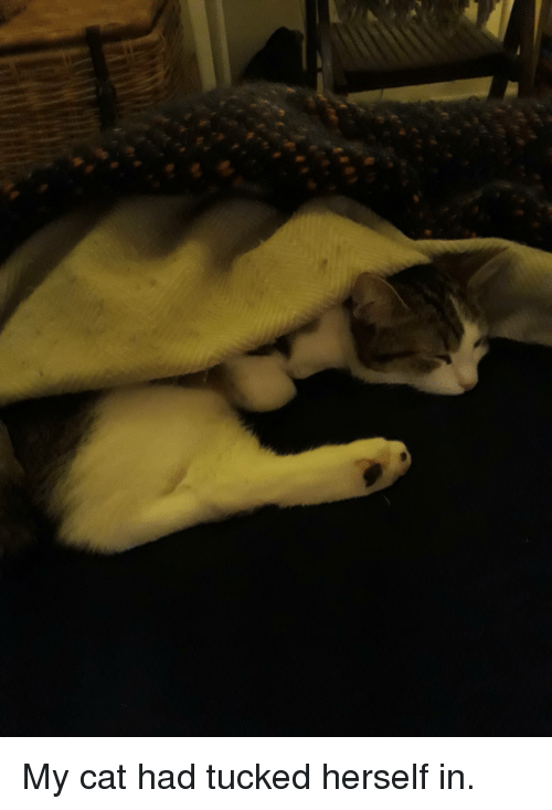 Cat, Tucked, and Had: My cat had tucked herself in.