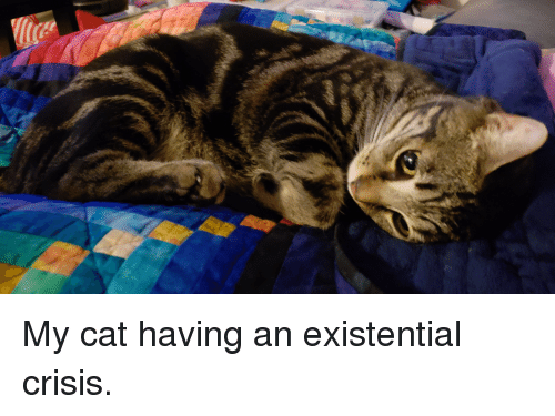 Cat, Crisis, and Existential: My cat having an existential crisis.