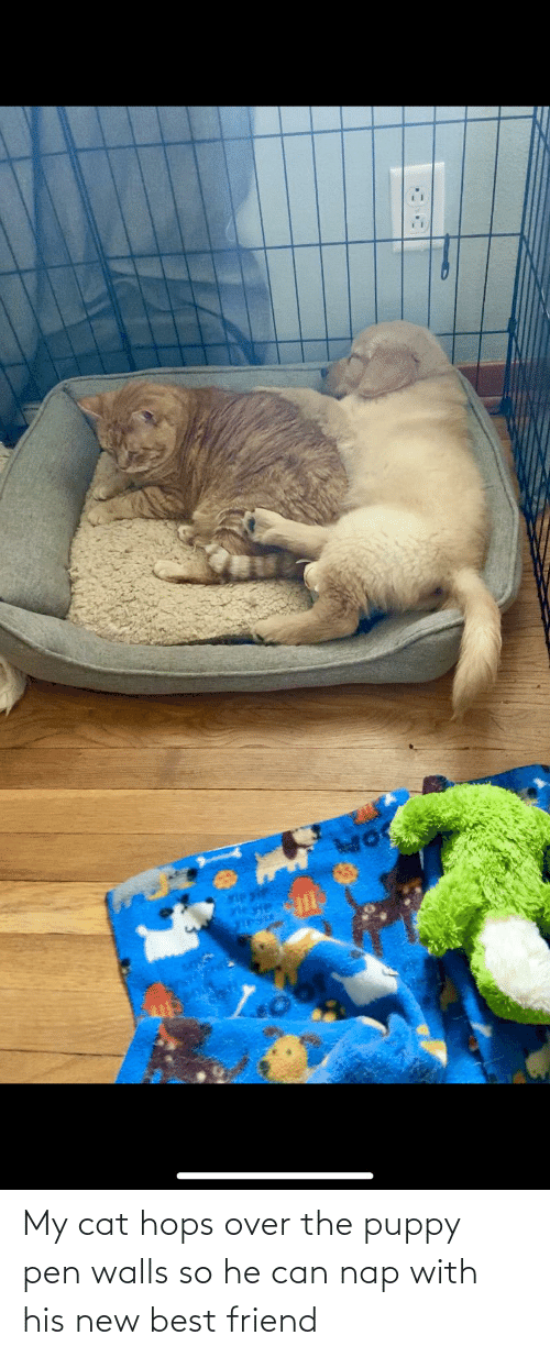hops: My cat hops over the puppy pen walls so he can nap with his new best friend