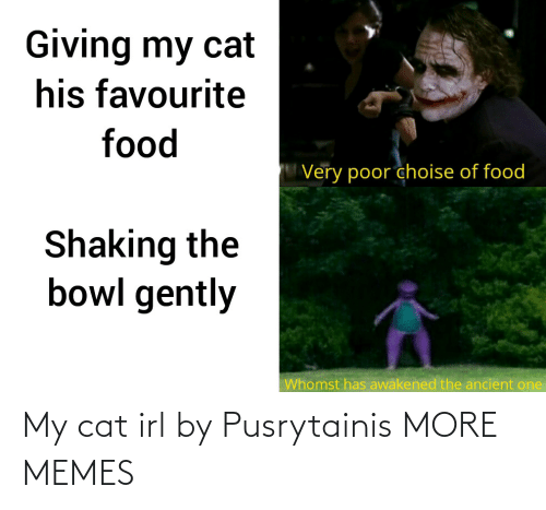 My Cat: My cat irl by Pusrytainis MORE MEMES
