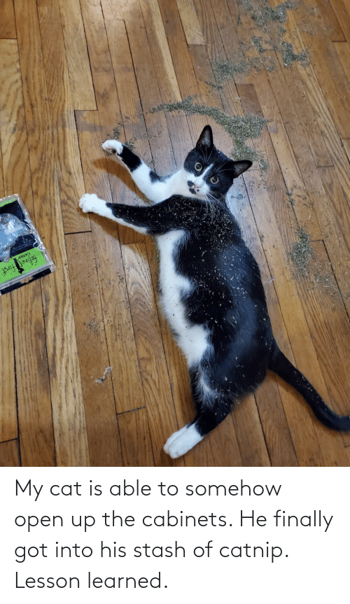 My Cat: My cat is able to somehow open up the cabinets. He finally got into his stash of catnip. Lesson learned.
