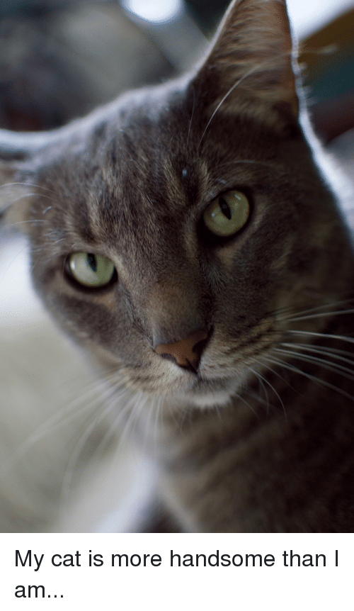 Cat, Bismarck, and Handsome: My cat is more handsome than I am...