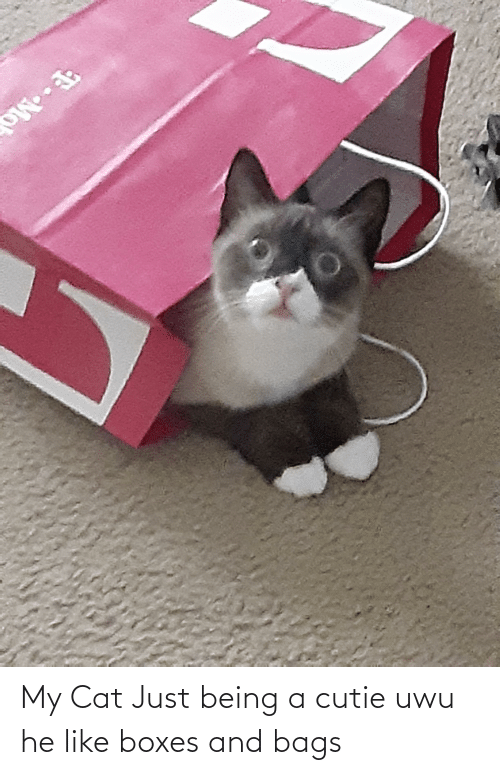 bags: My Cat Just being a cutie uwu he like boxes and bags
