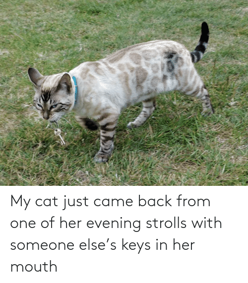 keys: My cat just came back from one of her evening strolls with someone else's keys in her mouth