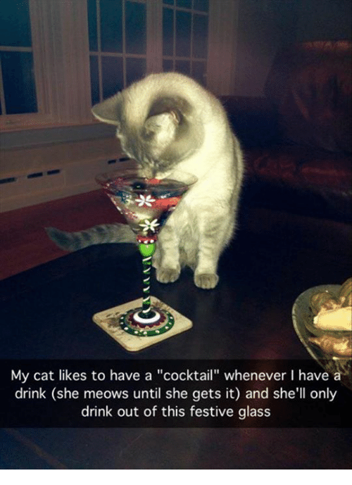 """Cocktails: My cat likes to have a """"cocktail"""" whenever I have a  drink (she meows until she gets it) and she'll only  drink out of this festive glass"""