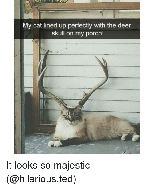 Majesticity: My cat lined up perfectly with the deer  skull on my porch! It looks so majestic (@hilarious.ted)