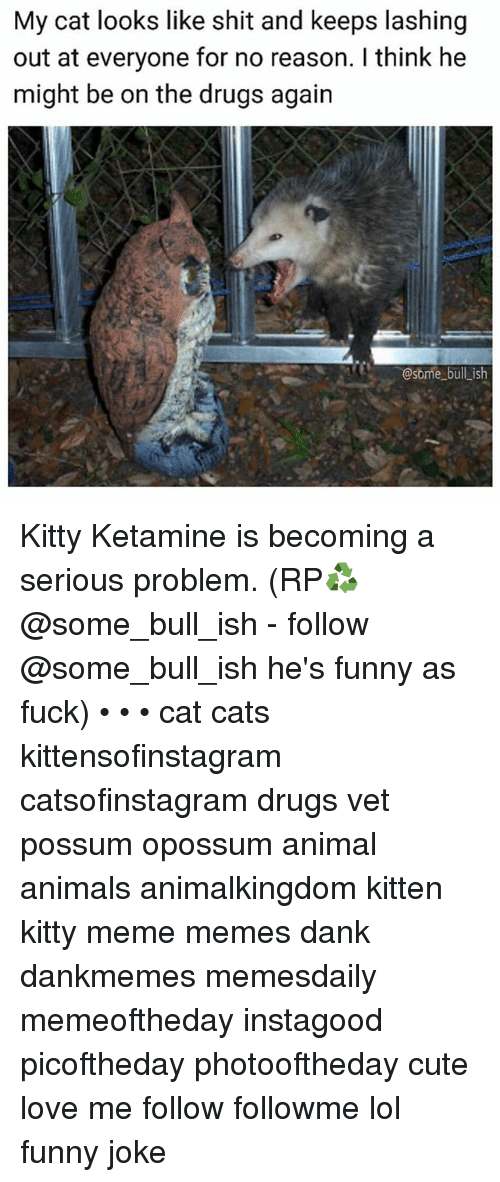 Animals, Cats, and Cute: My cat looks like shit and keeps lashing  out at everyone for no reason. I think he  might be on the drugs again  @some bull_ish Kitty Ketamine is becoming a serious problem. (RP♻️ @some_bull_ish - follow @some_bull_ish he's funny as fuck) • • • cat cats kittensofinstagram catsofinstagram drugs vet possum opossum animal animals animalkingdom kitten kitty meme memes dank dankmemes memesdaily memeoftheday instagood picoftheday photooftheday cute love me follow followme lol funny joke