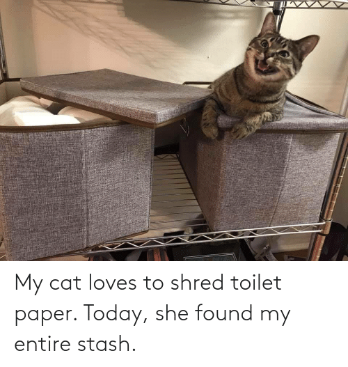 stash: My cat loves to shred toilet paper. Today, she found my entire stash.