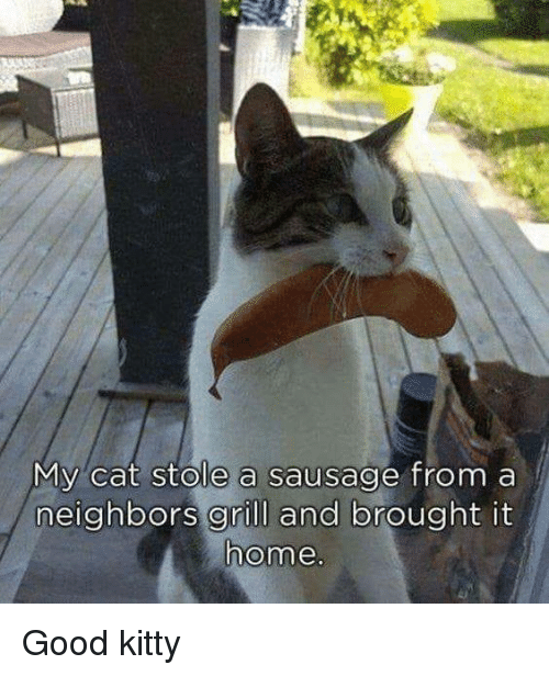 Memes, Good, and Neighbors: My cat stole a sausage from a  neighbors grill and brought it  ome Good kitty