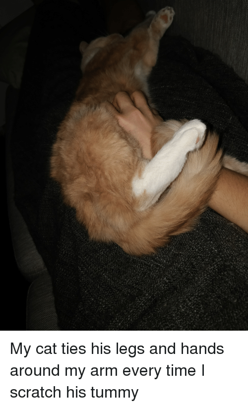 Scratch, Time, and Cat: My cat ties his legs and hands around my arm every time I scratch his tummy