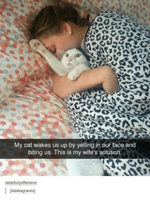 wifes: My cat wakes us up by yelling in our face and  biting us. This is my wife's solution.  tastefullyoffensive:  Jalaskagraves