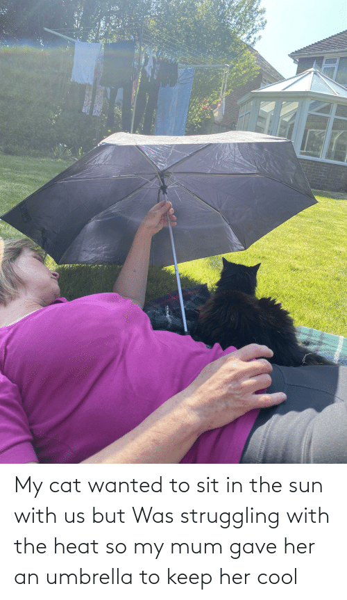 Sit In: My cat wanted to sit in the sun with us but Was struggling with the heat so my mum gave her an umbrella to keep her cool