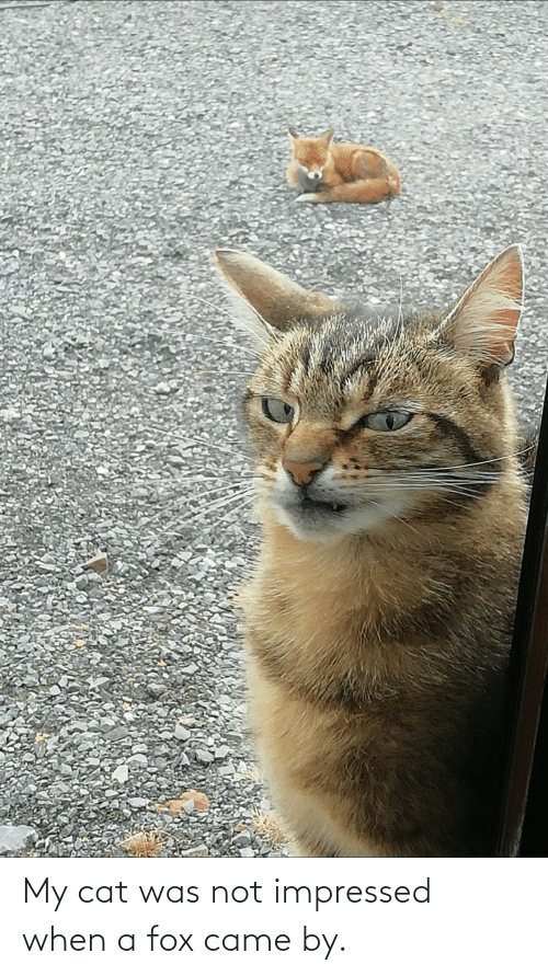 fox: My cat was not impressed when a fox came by.