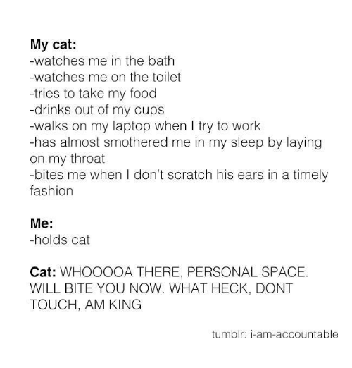 Memes, Watch Me, and Laptop: My cat:  -watches me in the bath  -watches me on the toilet  -tries to take my food  drinks out of my cups  -walks on my laptop when I try to work  -has almost smothered me in my sleep by laying  on my throat  bites me when I don't scratch his ears in a timely  fashion  Me  holds cat  Cat  WHOOOOA THERE, PERSONAL SPACE.  WILL BITE YOU NOW. WHAT HECK, DONT  TOUCH, AM KING  tumblr: am-accountable