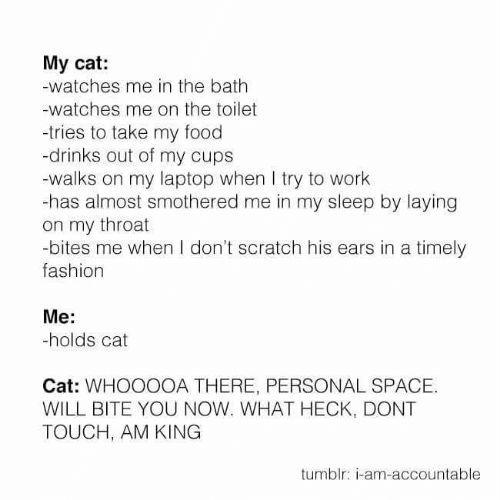 Personal Space: My cat:  -watches me in the bath  -watches me on the toilet  tries to take my food  -drinks out of my cups  -walks on my laptop when I try to work  -has almost smothered me in my sleep by laying  on my throat  -bites me when I don't scratch his ears in a timely  fashion  Me:  -holds cat  Cat: WHOOOOA THERE, PERSONAL SPACE.  WILL BITE YOU NOW. WHAT HECK, DONT  TOUCH, AM KING  tumblr: i-am-accountable